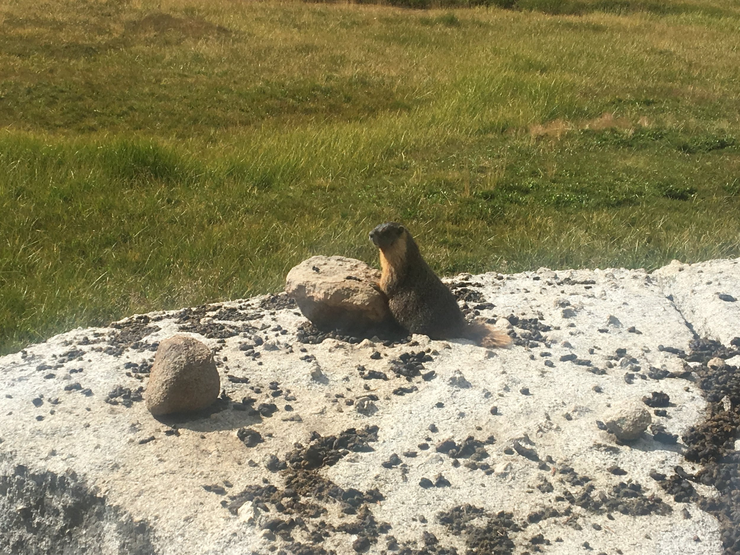 The view from our campsite and one of our marmot friends!