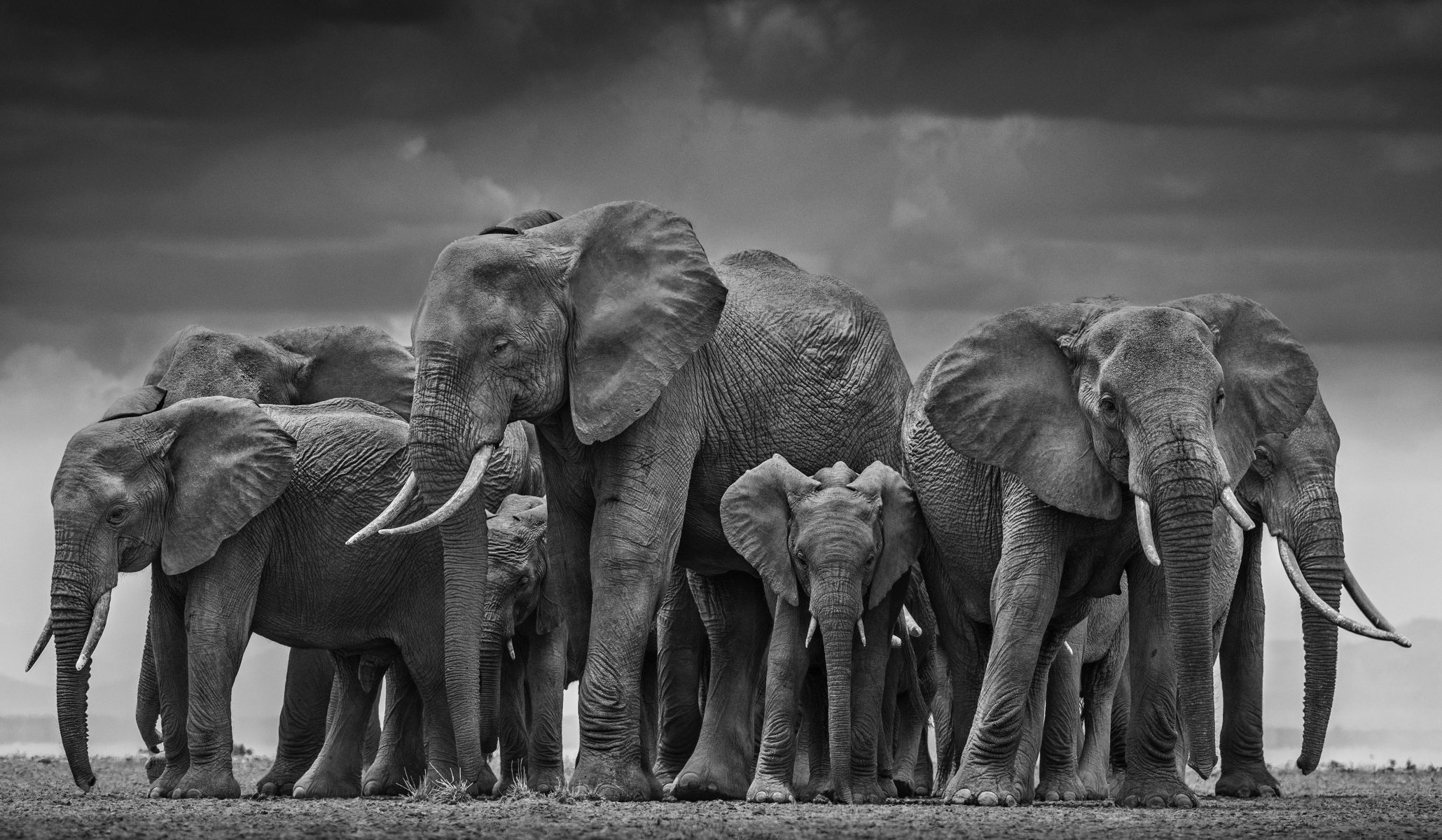Circle of Life by David Yarrow Photography