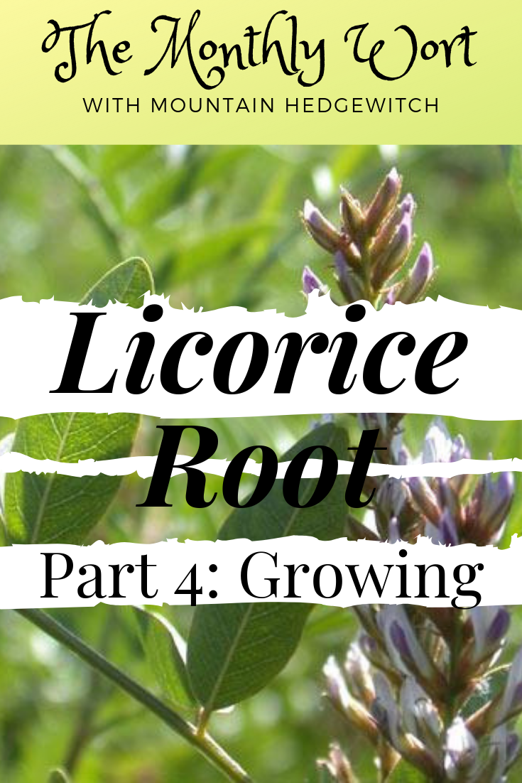 MW Licorice root 4 pin.png