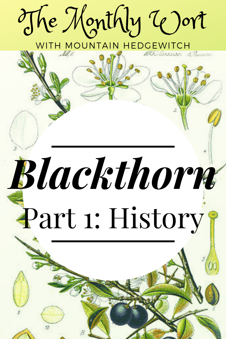 MW Blackthorn pin 1.png