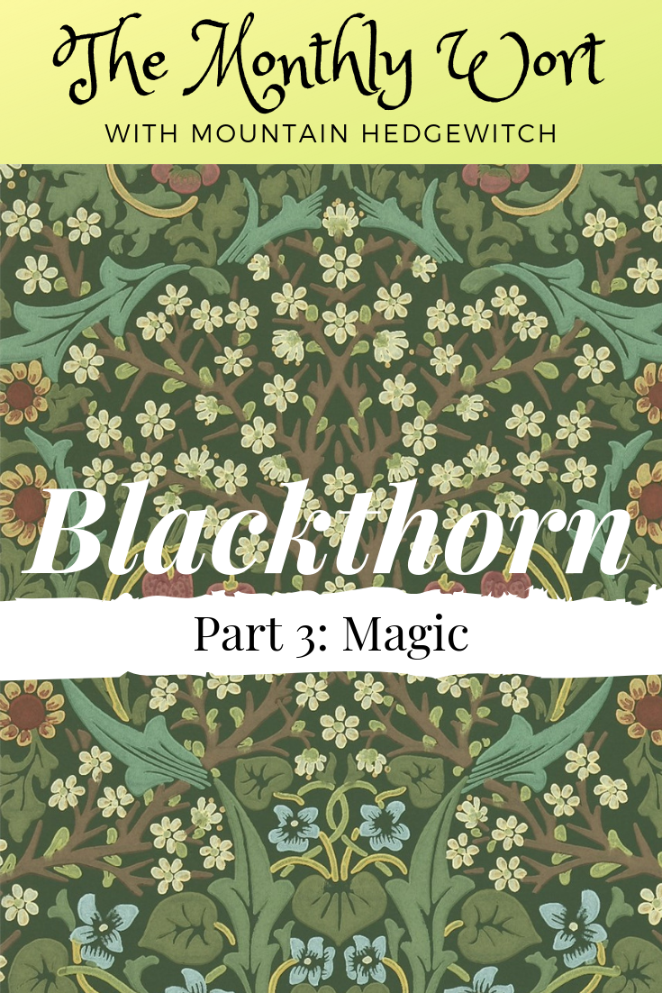 MW Blackthorn pin 3.png