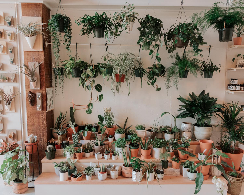inside wild indoor plant blog 04.jpg
