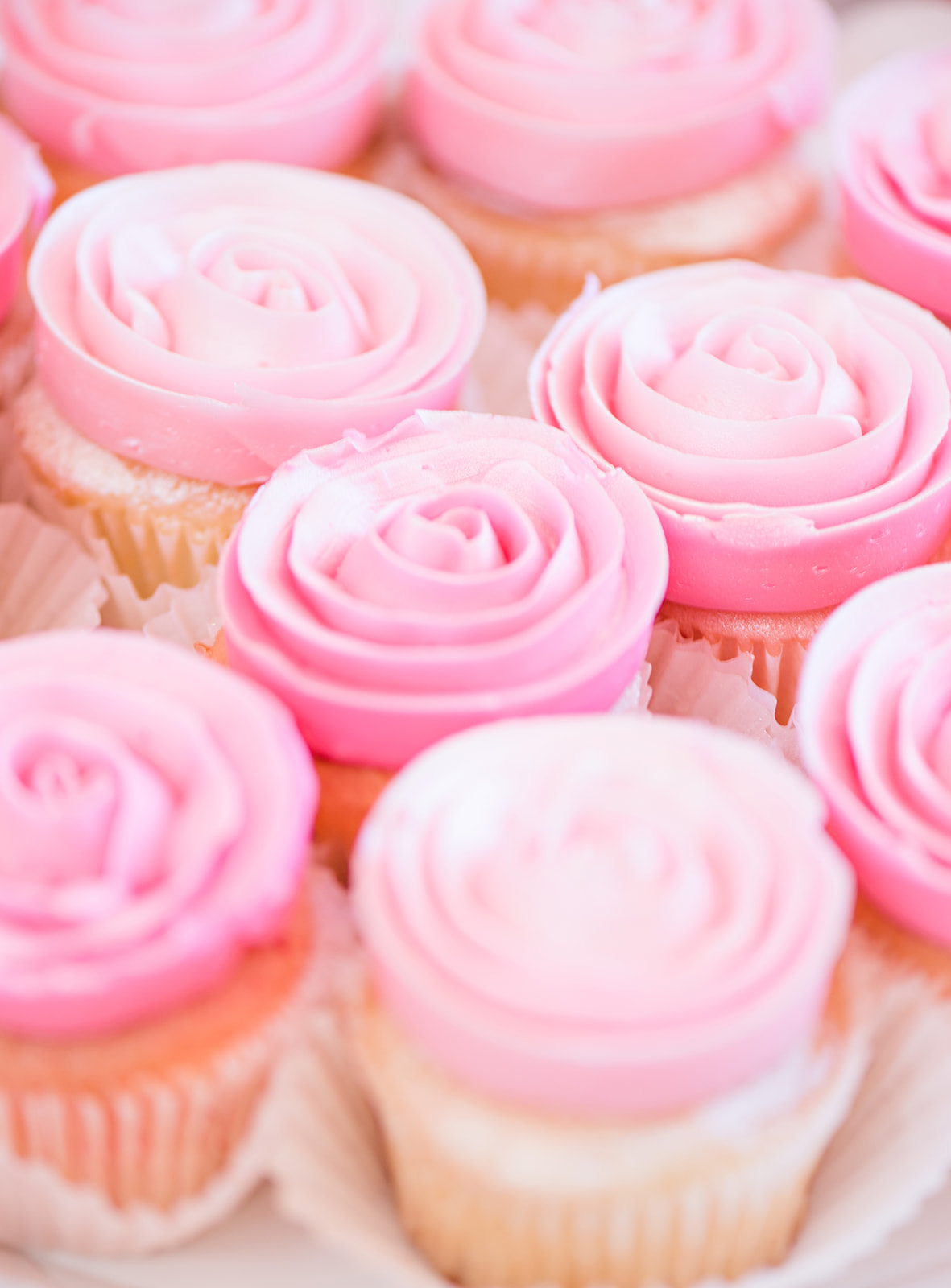 cupcake package  |  $24