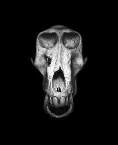 TQK_Skulls_Baboon_300.jpg