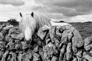 TQK_Burren_Pony_Co_Clare_Ireland_300.jpg