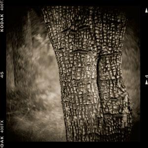 DMK_Trees_300.jpg