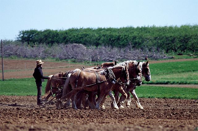 Amish pic website 2.jpg