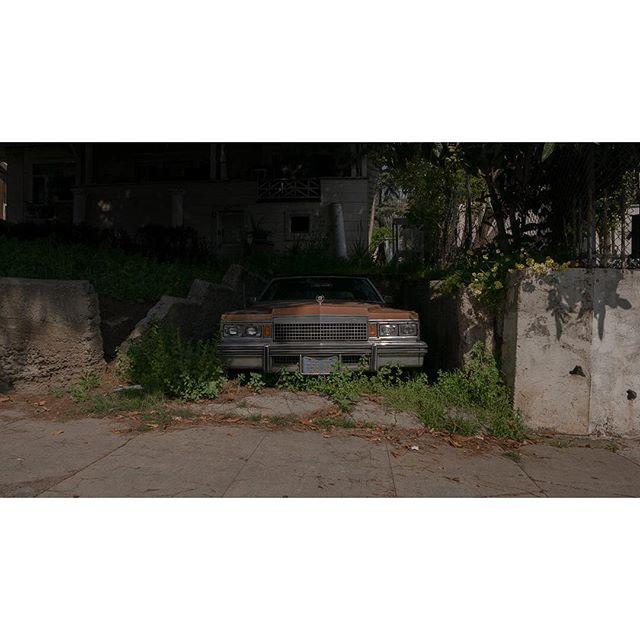 Uninterrupted Greens • • • • • • #viewfinder #archivecollectivemag #subjectivelyobjective #imaginarymagnitude  #solarcollective #fivesixmag #eyeshotmag #ourmomentum #cadillac #fisheyelemag #broadmag #documentingspace #magnumphotos #street_life #hikaricreative #helloicp #spicollective #myspc #foammagazine #lightzine #summersuncollection #collecmag #lensonstreets