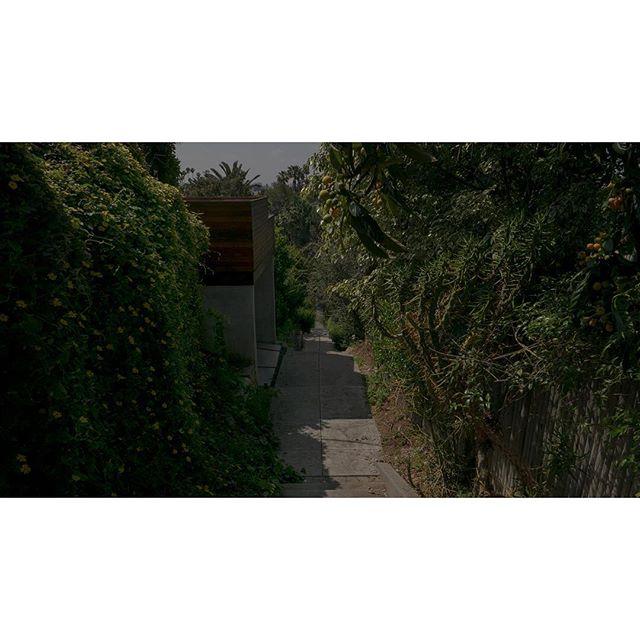 Morning Greens • • • • •  #viewfinder #archivecollectivemag #subjectivelyobjective #imaginarymagnitude  #solarcollective #fivesixmag #eyeshotmag #ourmomentum #fisheyelemag #broadmag #documentingspace #urbanplants #magnumphotos #street_life #hikaricreative #helloicp #spicollective #losangelesstreets #myspc #plants #foammagazine