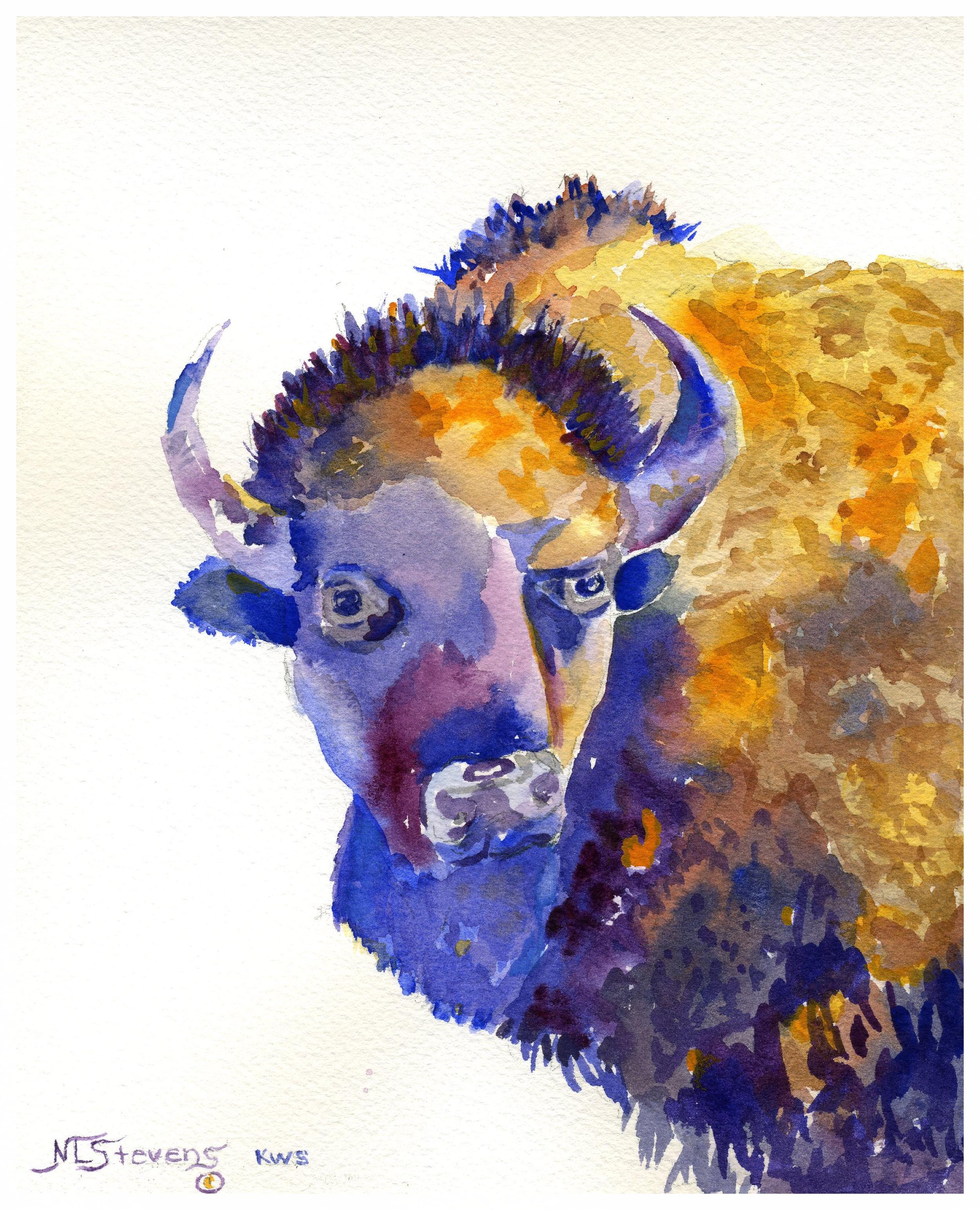 The Bison Print   7.5 x 8 - $32.00
