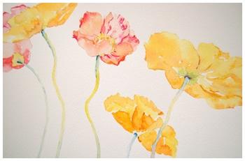 Yellow & MelonPoppies    Giclée Print     9 x 12 - $260