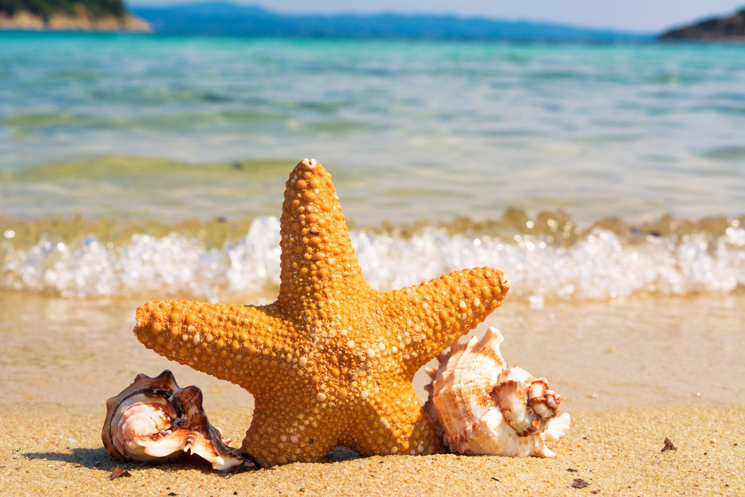 animal-beach-coast-414105.jpg