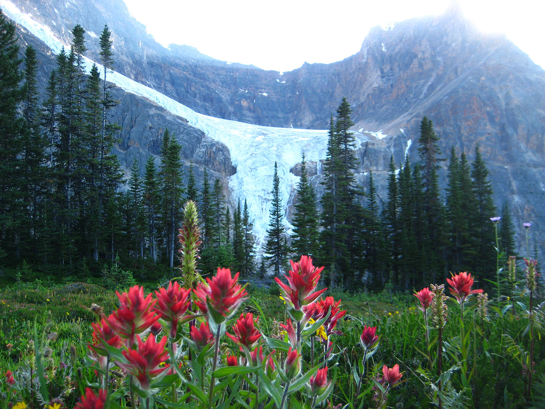 Angel-Glacier-and-Paintbrush.jpg