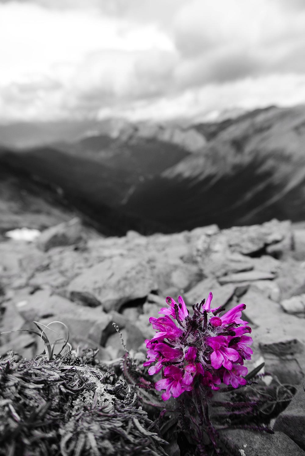 Ashlar-Ridge-in-background.png