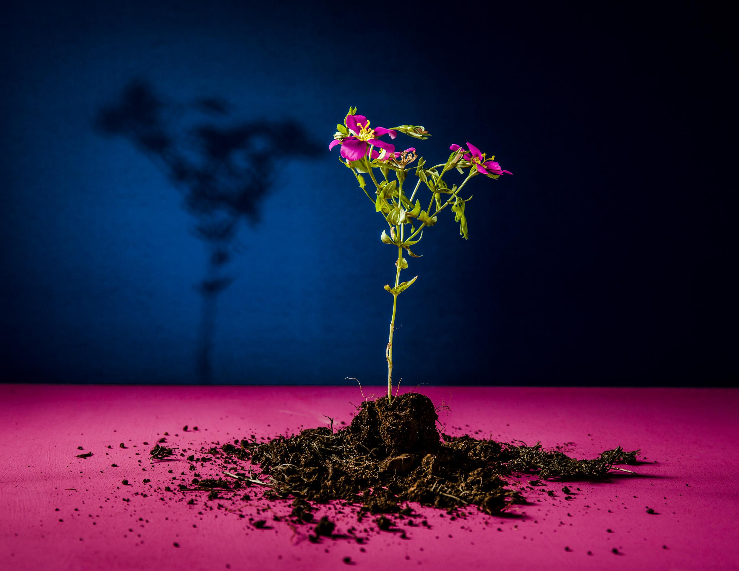 flower mound port size.jpg