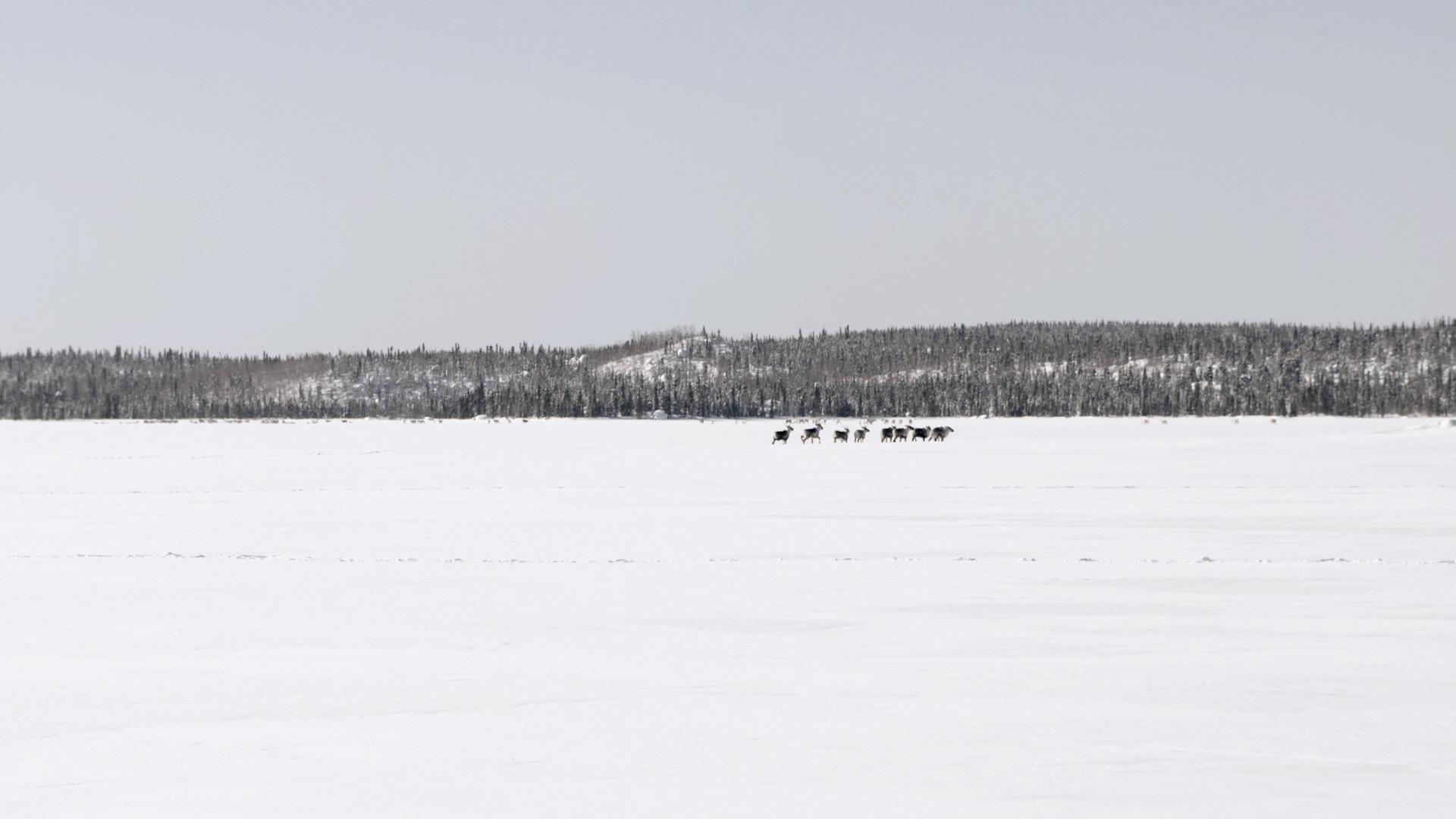 caribou demo screenshot 09.jpg