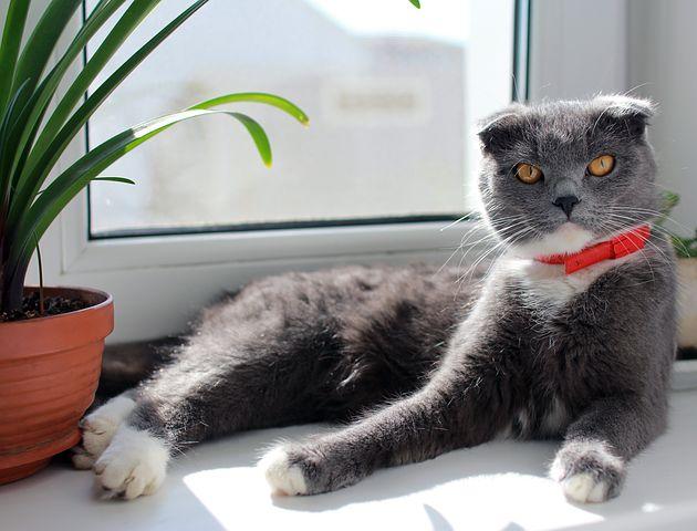 cat-2765665__480.jpg