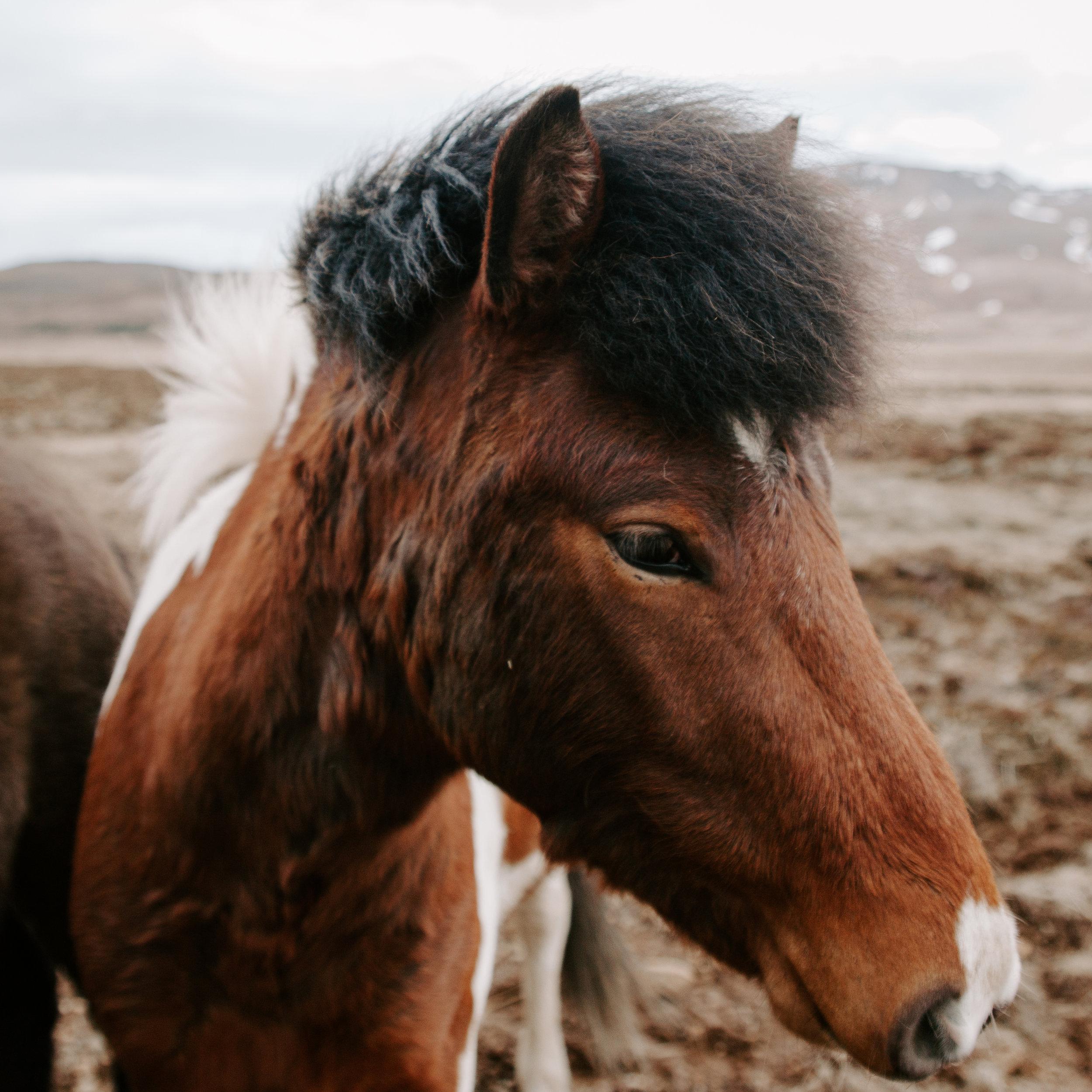 Iceland-honeymoon-4037.jpg