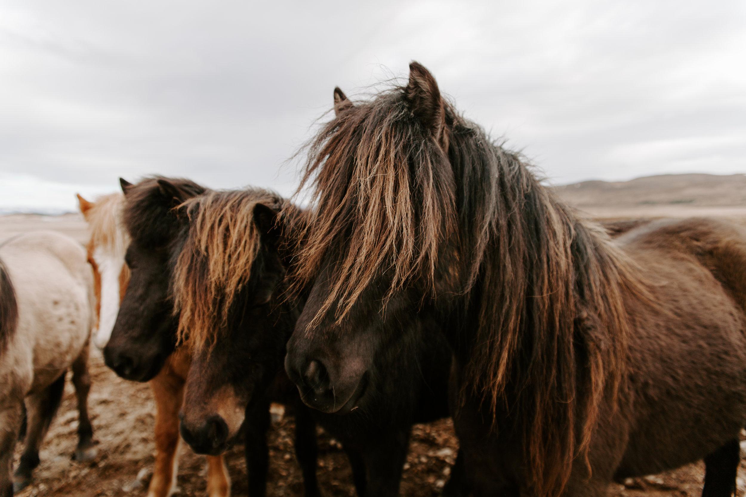 Iceland-honeymoon-4038.jpg