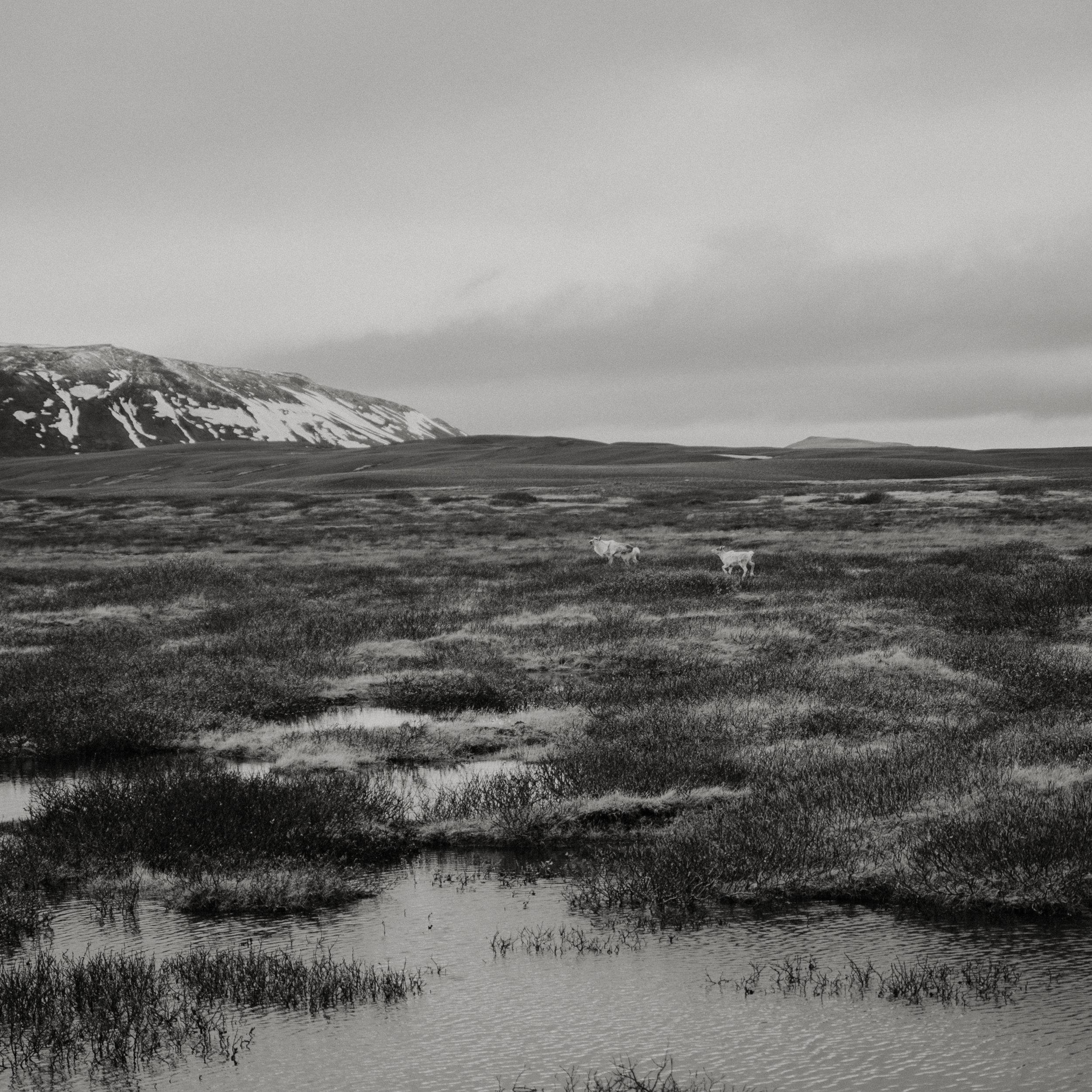 Iceland-honeymoon-4331.jpg