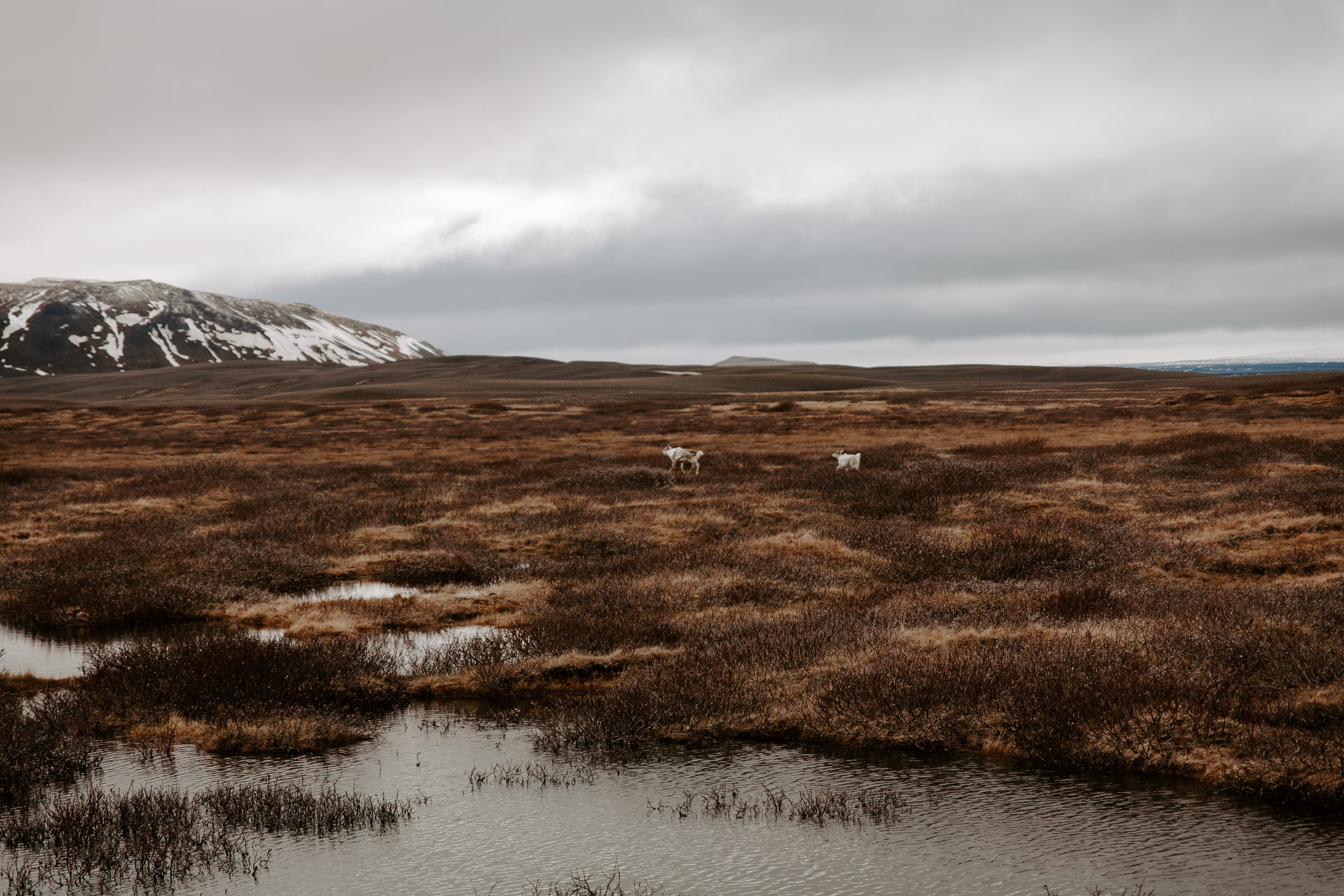 Iceland-honeymoon-4326.jpg