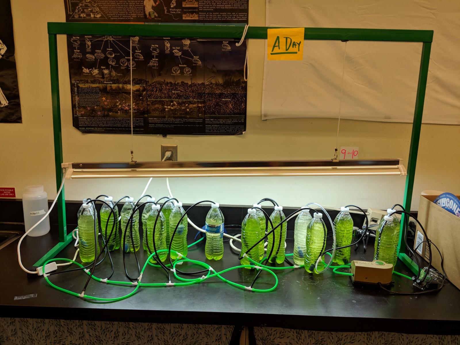 Acree - Biofuel Engineering 1.jpg