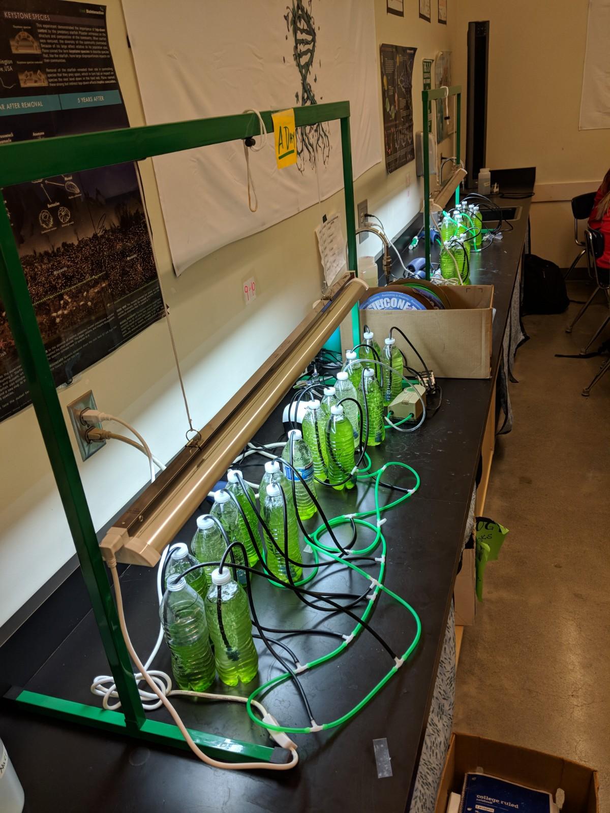 Acree - Biofuel Engineering 3.jpg