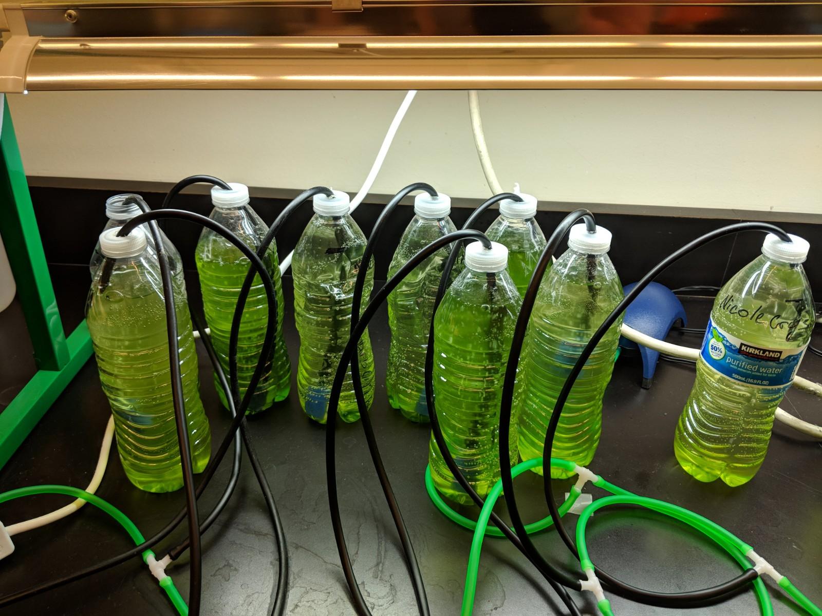 Acree - Biofuel Engineering 2.jpg