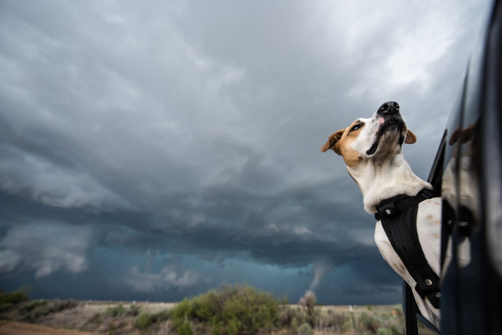 Arriving at another supercell, Joplin scopes out the sky looking for any signs of rotation.