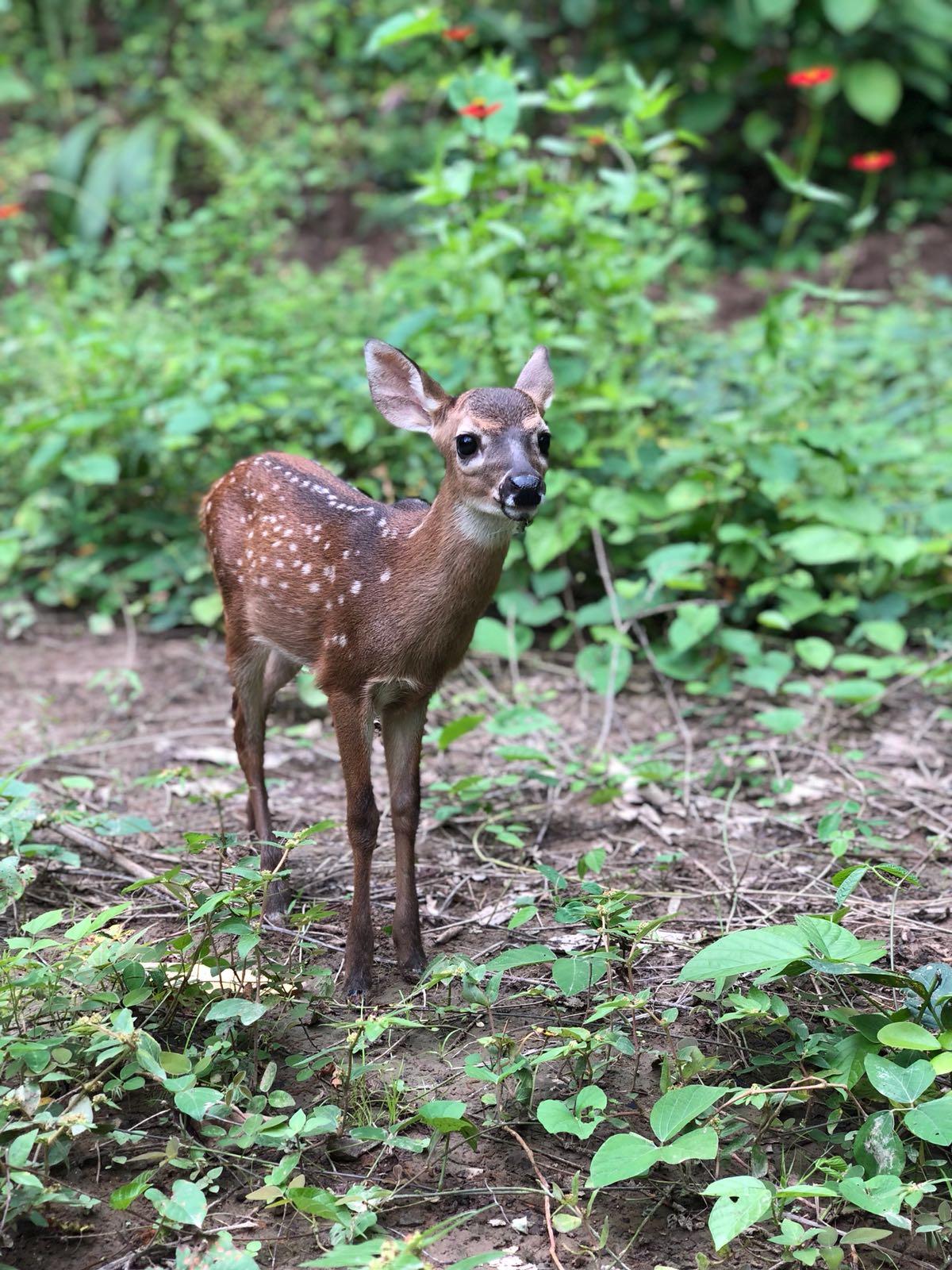 Deer CU.jpeg