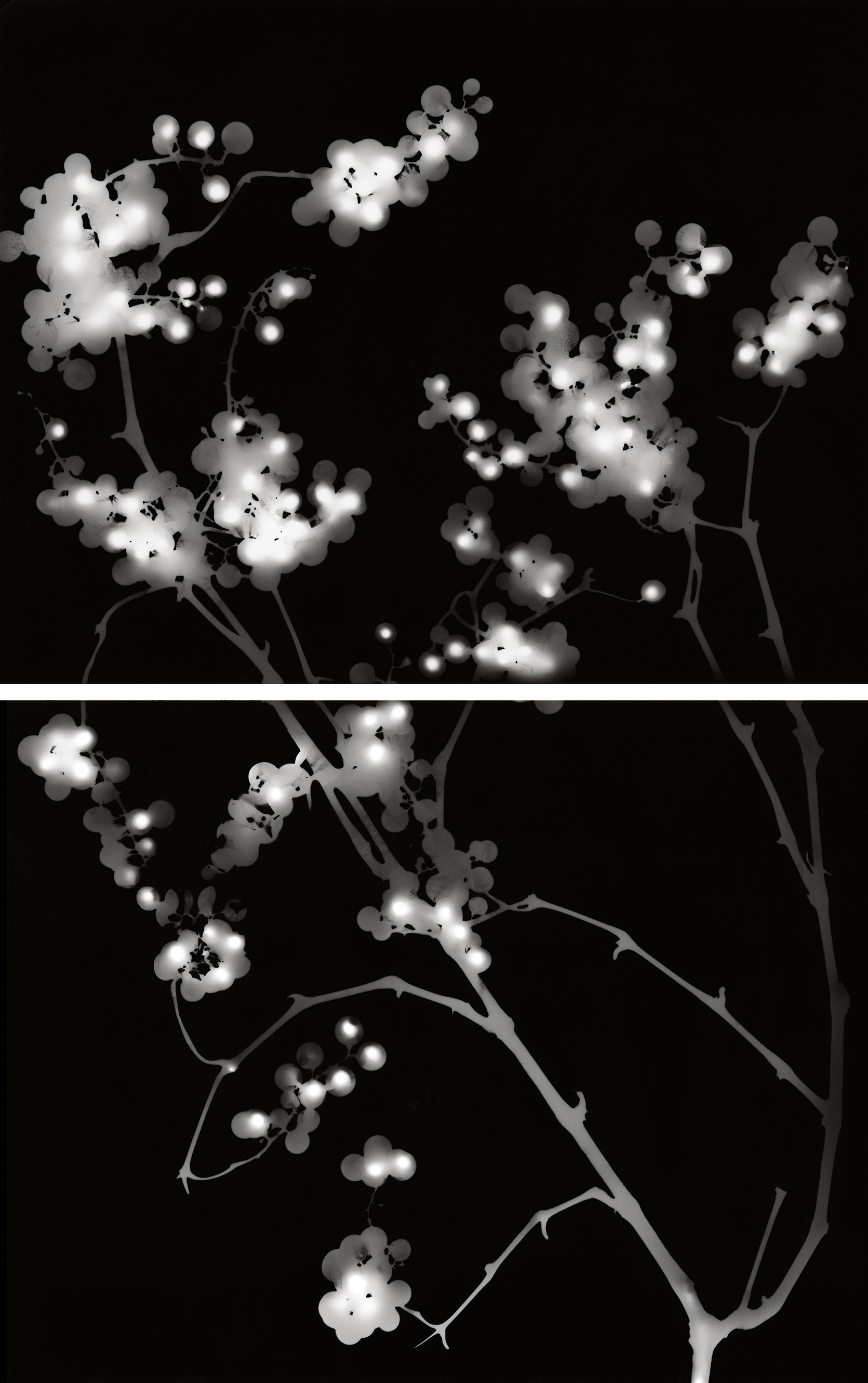 25. Untitled (specular diptych #20). 2015. Photogram.
