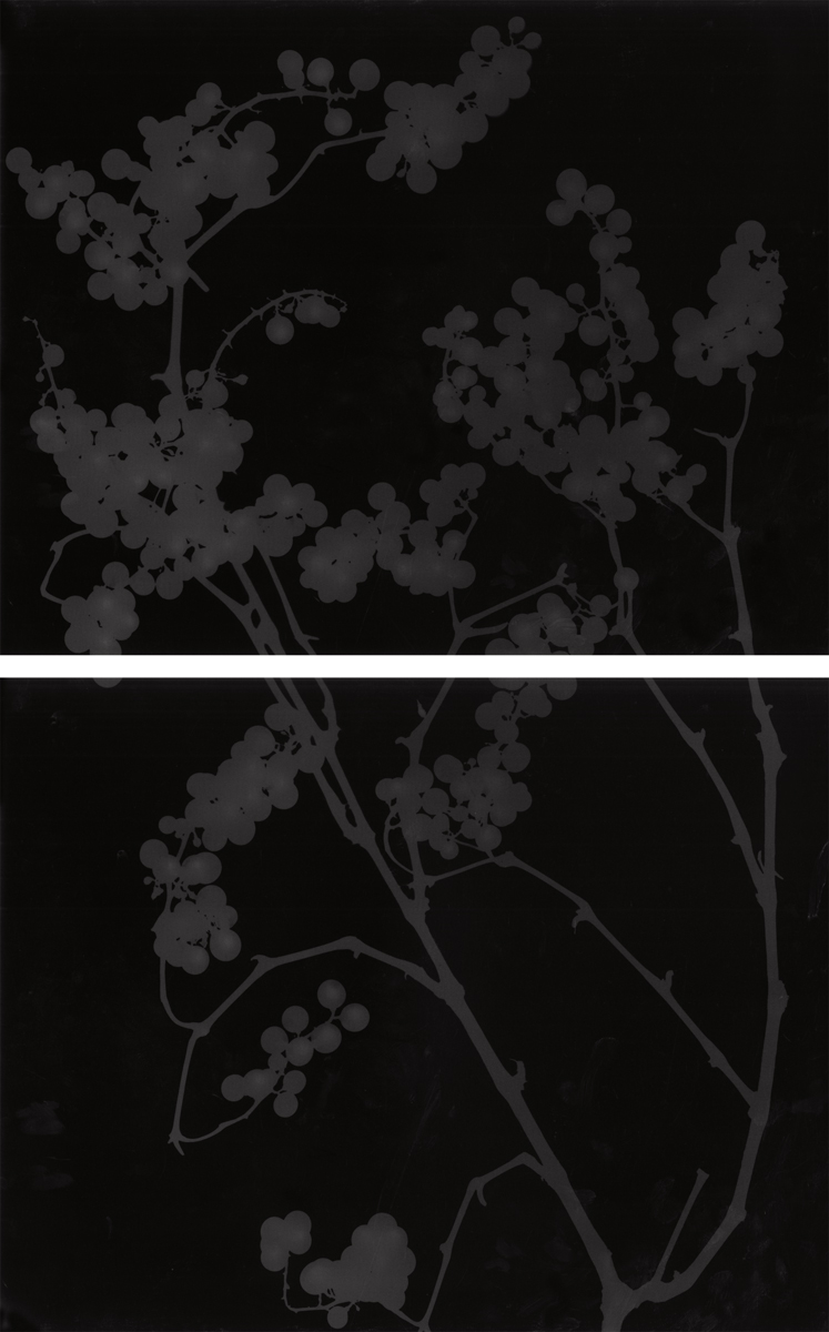 10. Untitled diptych (dark #11). 2015. Photogram.