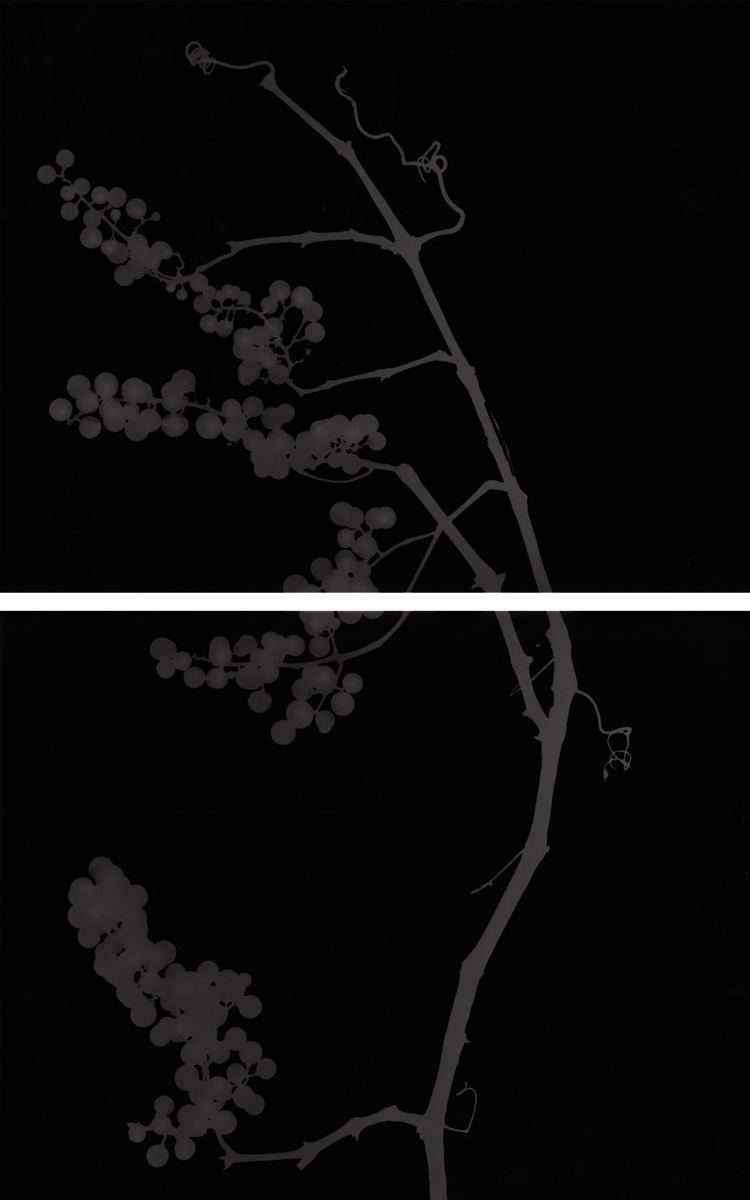 11. Untitled diptych (dark #2). 2015. Photogram.