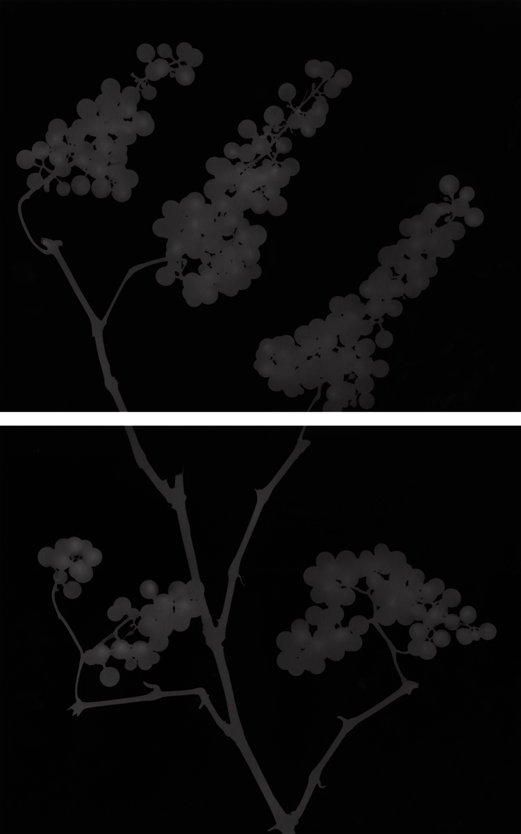 12. Untitled diptych (dark #6). 2015. Photogram.