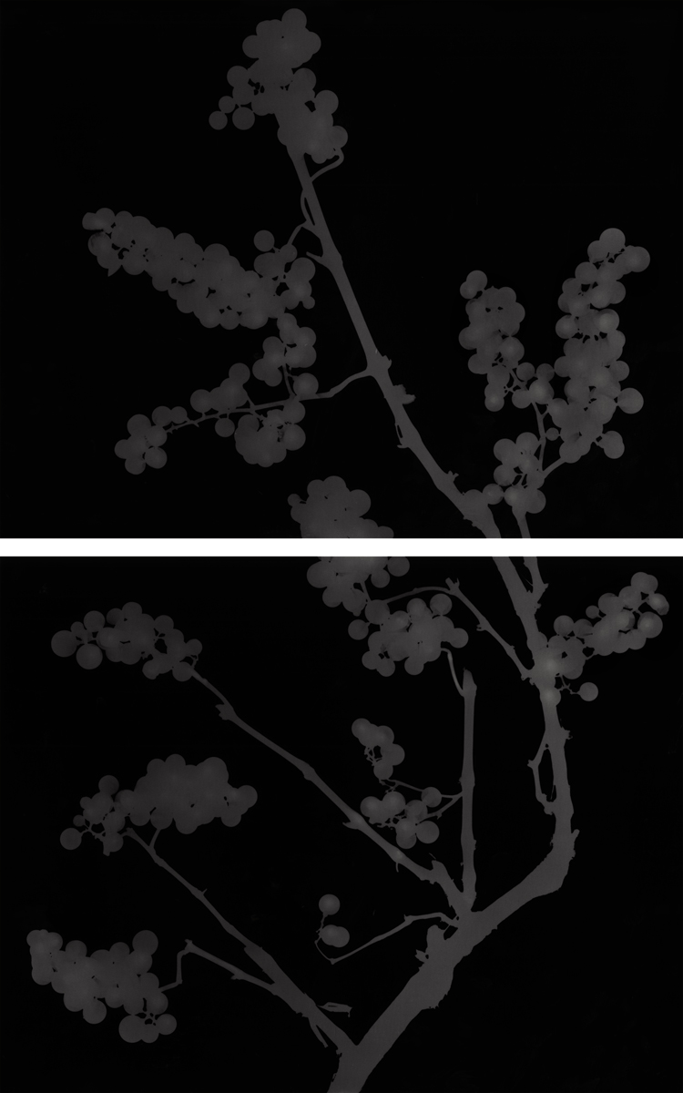 13. Untitled diptych (dark #9). 2015. Photogram.