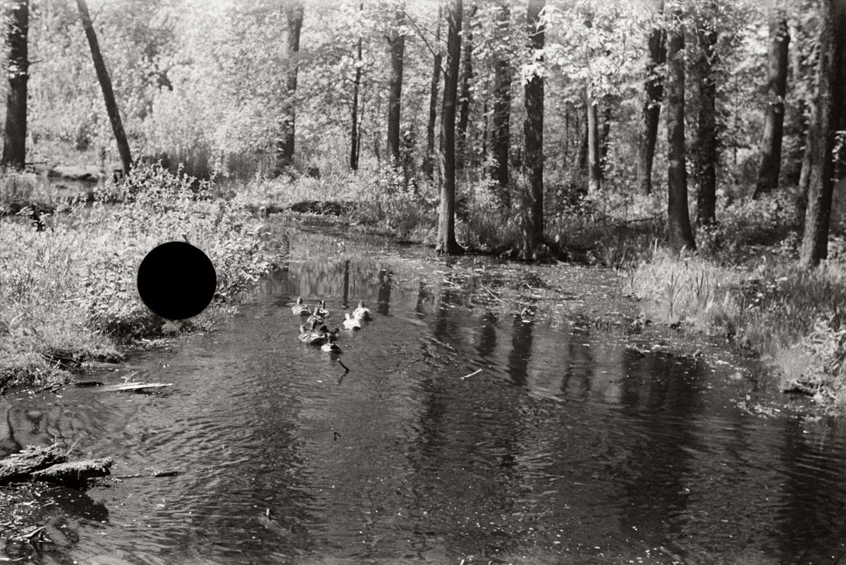 13. Untitled. Michigan.1936. Paul Carter. 8a20927.