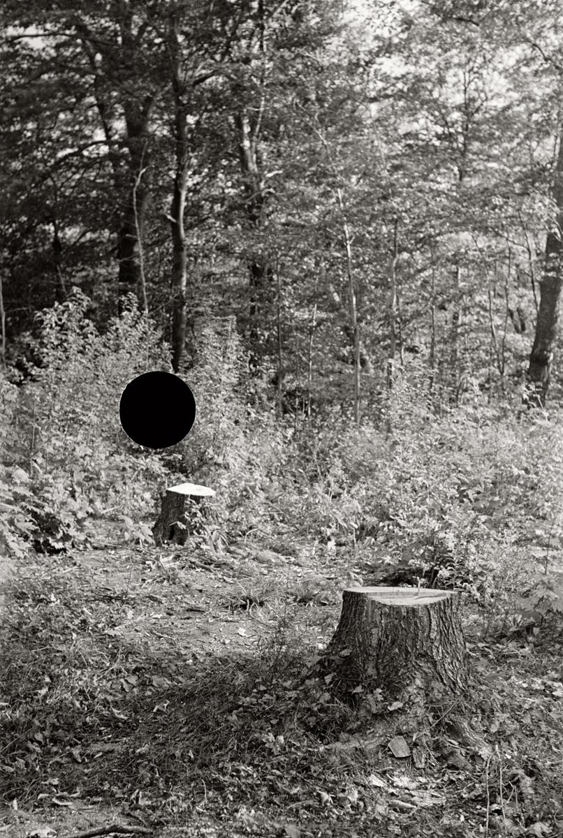26. Cut-over forest land, Otsego County, New York. 1937. Arthur Rothstein. 8a09093.