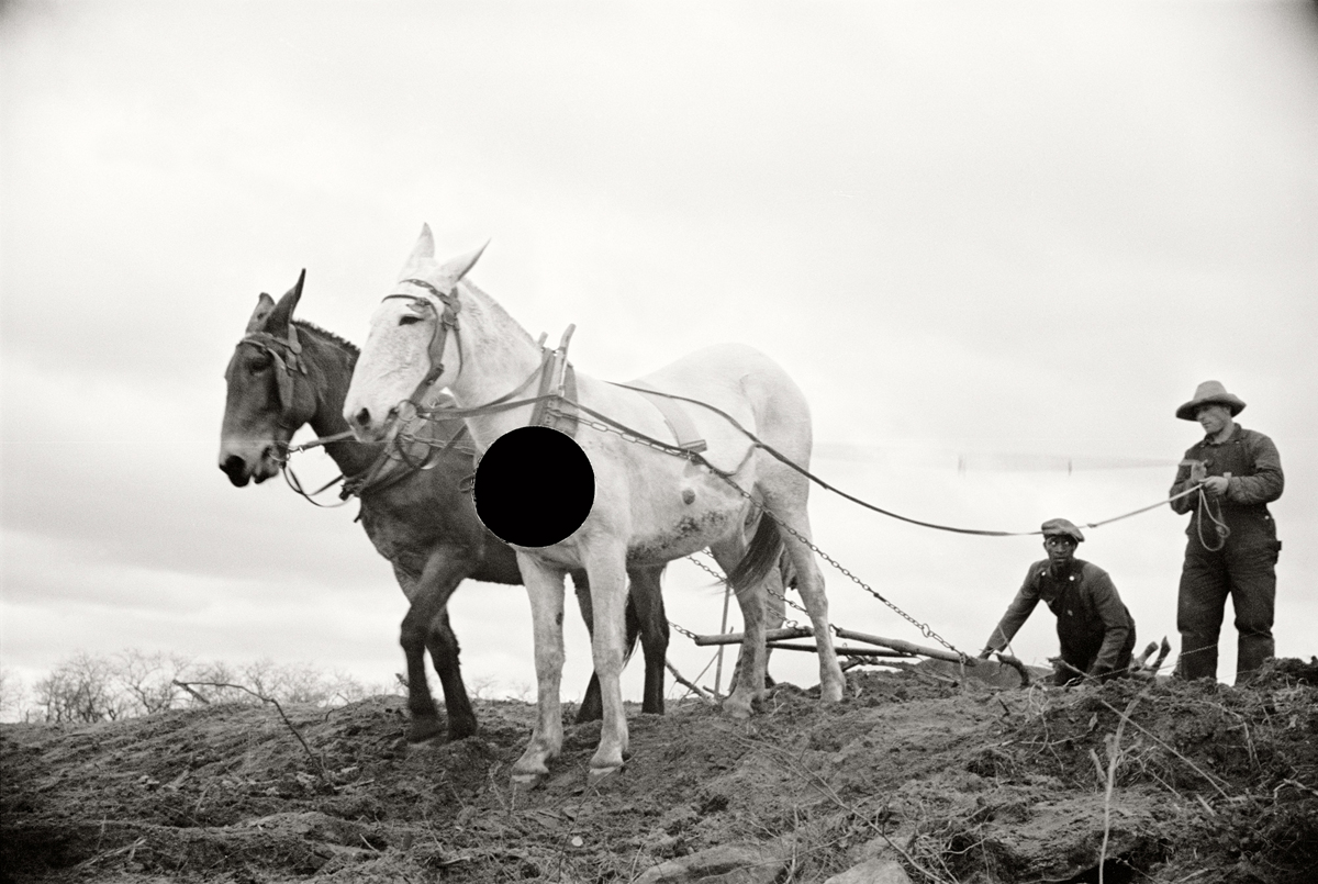 43. Getting fields ready for spring planting.North Carolina. 1936. Carl Mydans. 8a01340.