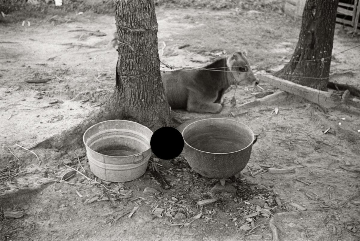 53. Untitled. Alabama. 1936. Walker Evans. 8a44615.