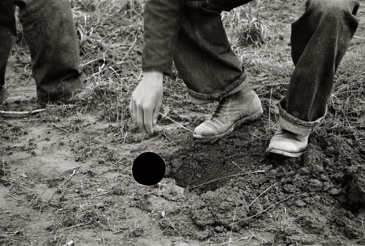 73. Planting locust root cutting, Natchez Trace Project, Tennessee. 1936. Carl Mydans. 8a01547.