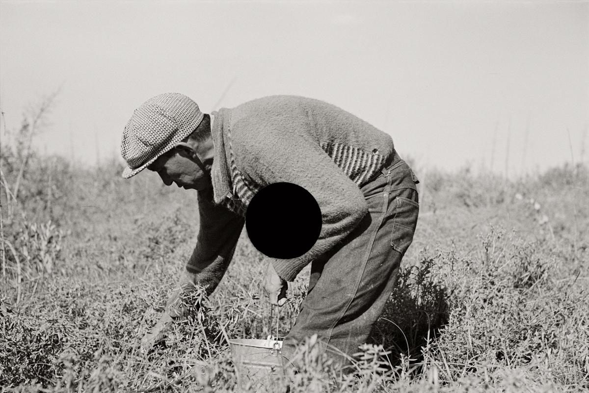 74. Blueberry picker, near Little Fork, Minnesota. 1937. Russell Lee. 8a21891.