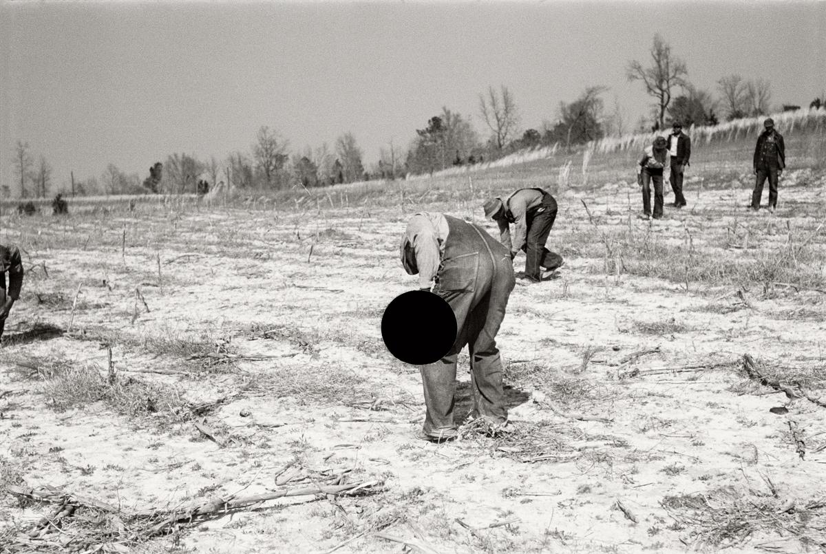 77. Planting slash pine, Macon County, Alabama. 1937. Arthur Rothstein. 8a08431.