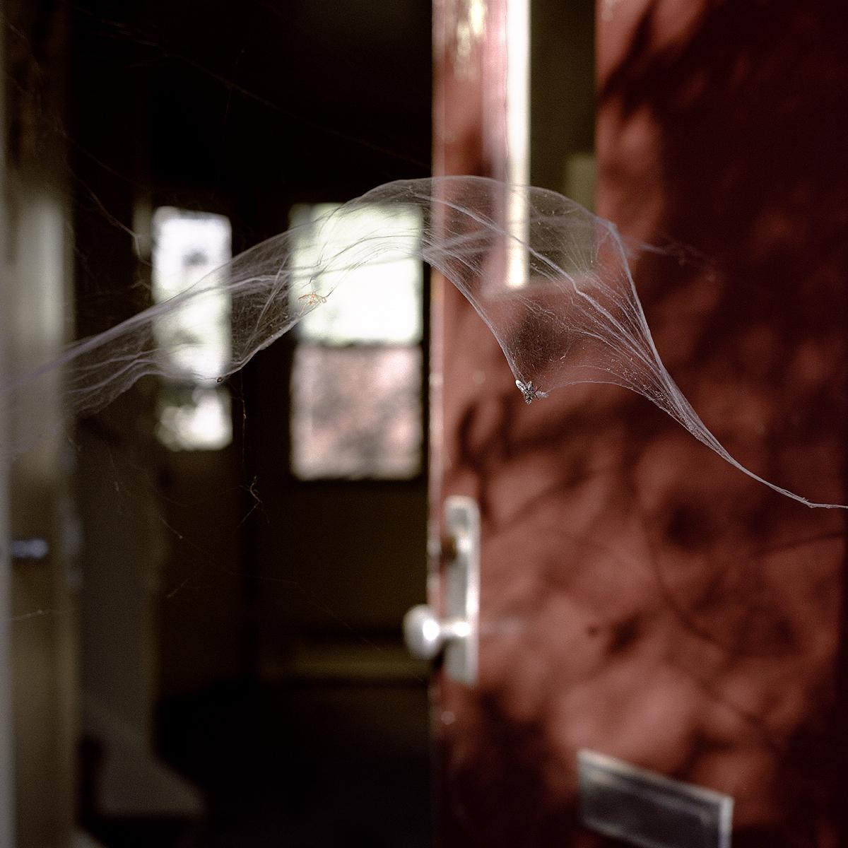 25. Untitled (Cobweb). 2005. Archival Pigment Print.