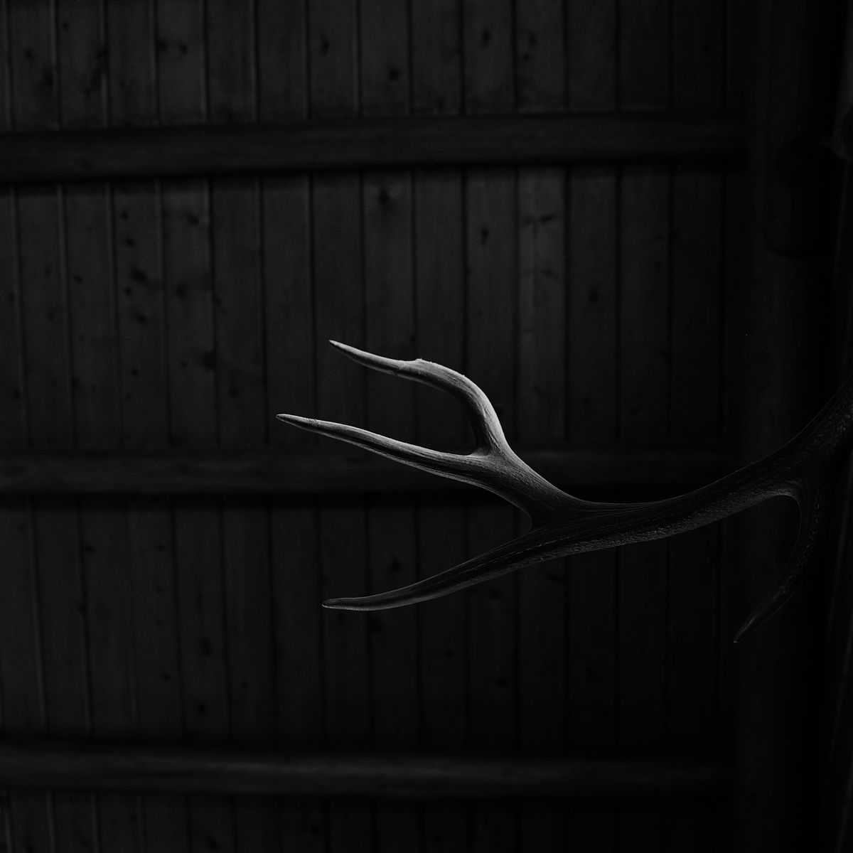 6. Antler, Sagamore Great Camp, Raquette, NY. 2000. Toned Gelatin Silver Print.