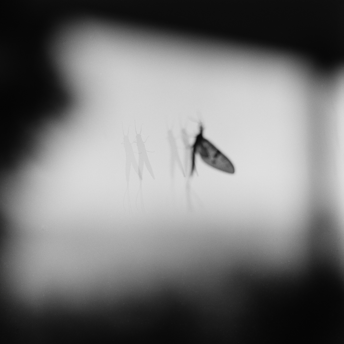 27. Shad Fly and Reflections, Valcour, NY. 2000. Toned Gelatin Silver Print.