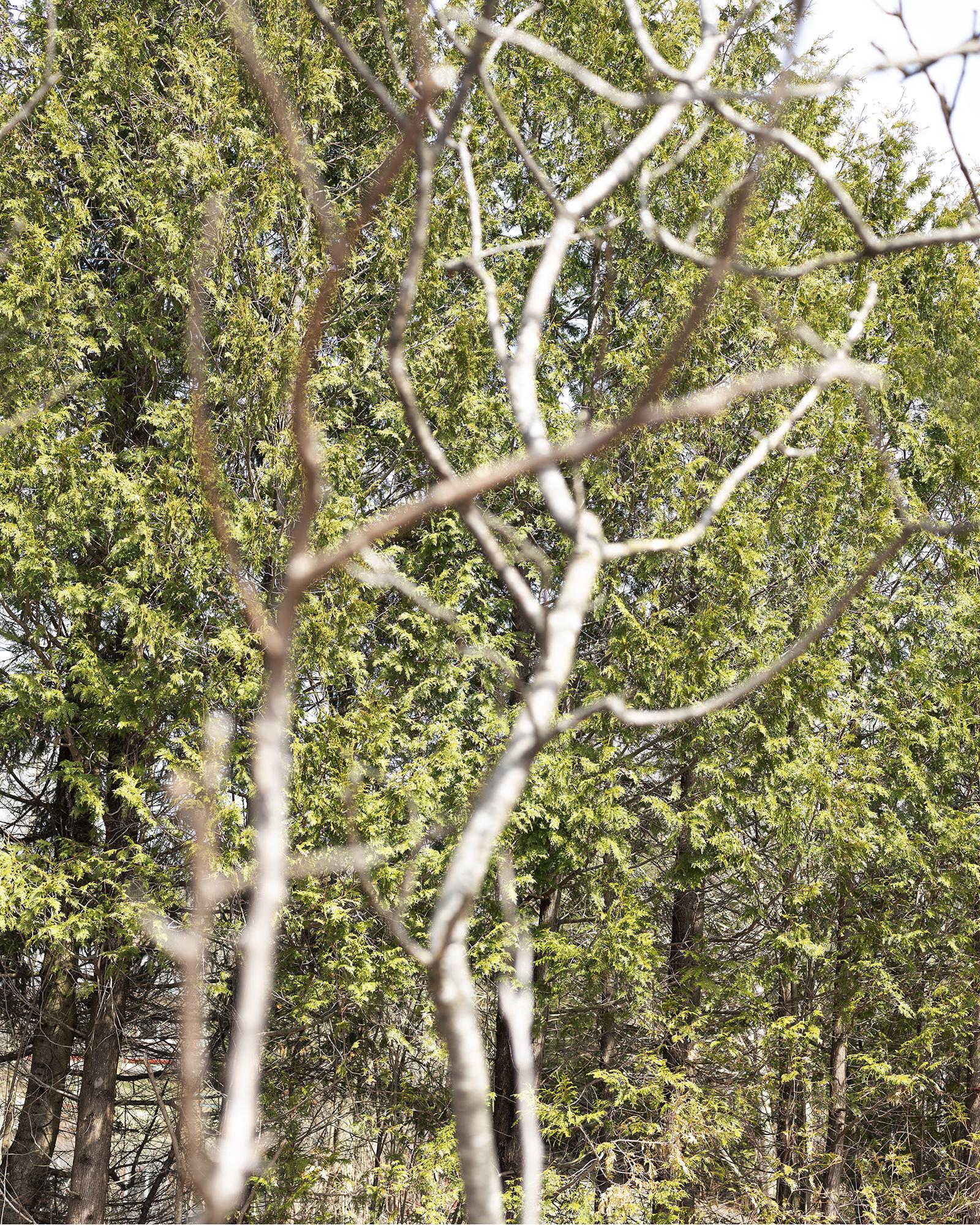 53. cedar and sumac 21 crop 10%22.jpg