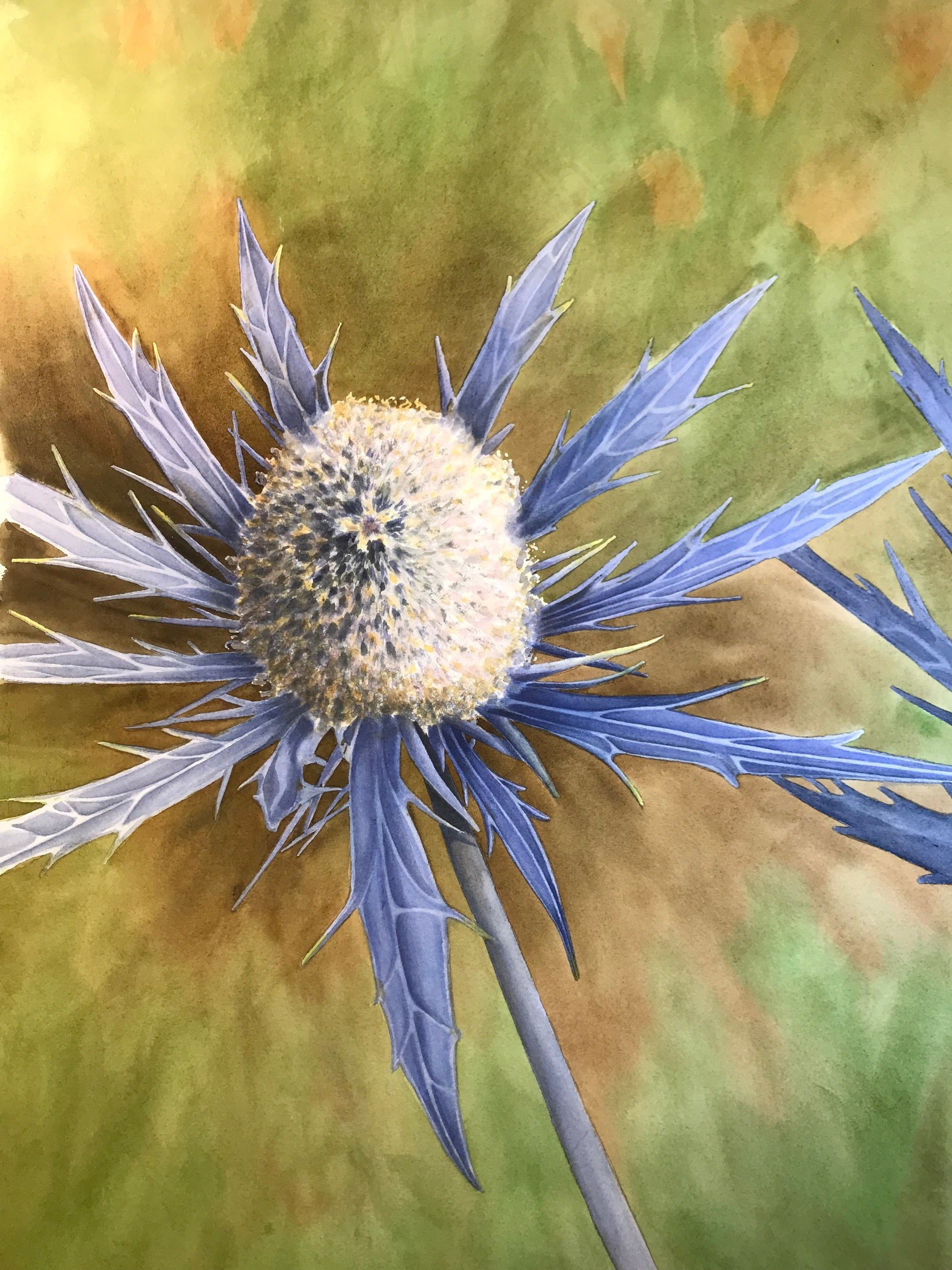 Blue Thistle (Eryngium)