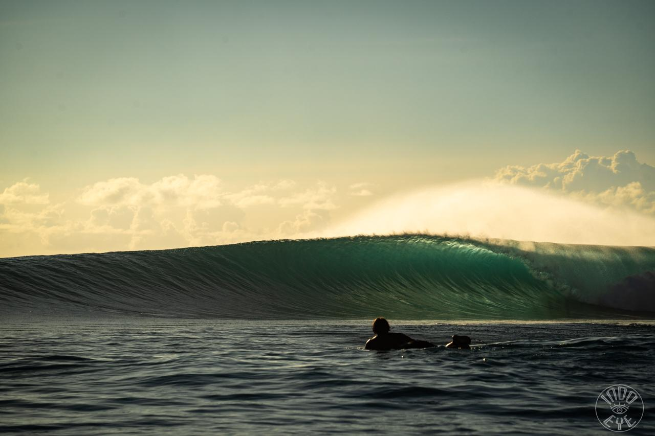 Mentawai - Hollow Tree's -