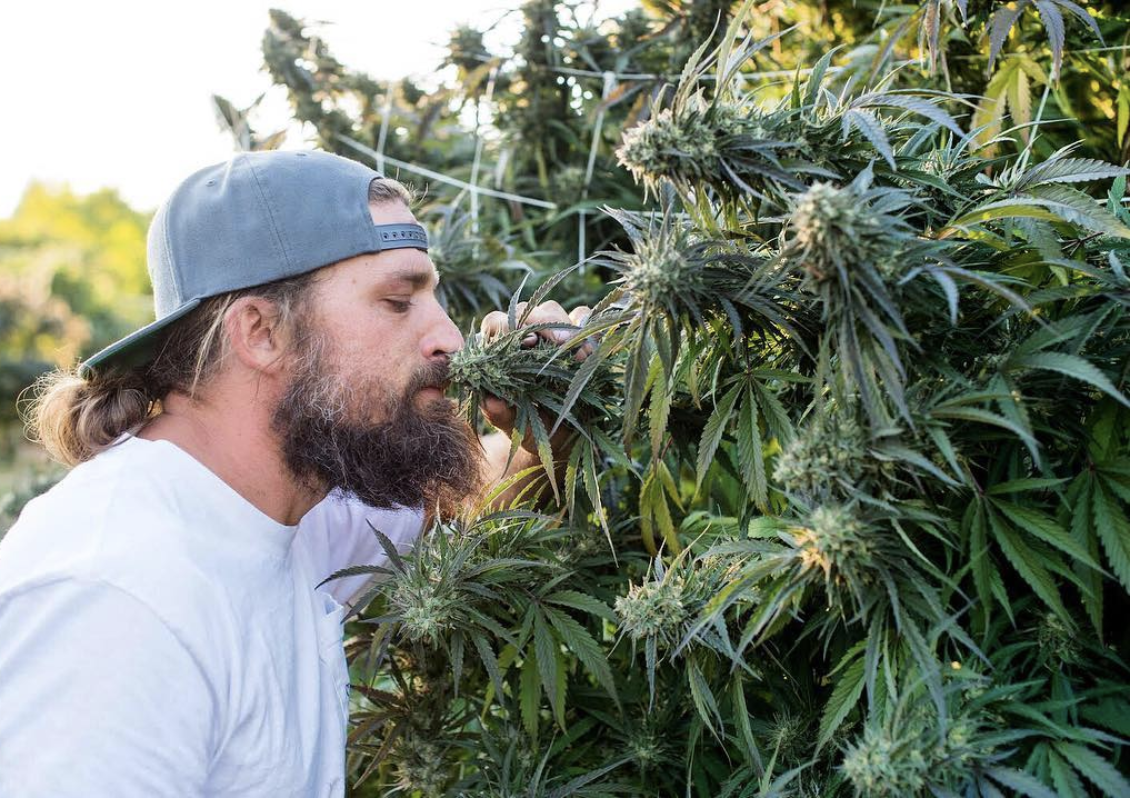 Sticky Fields Cannabis