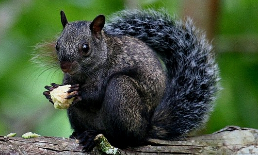 0160-SquirrelTropical.jpg